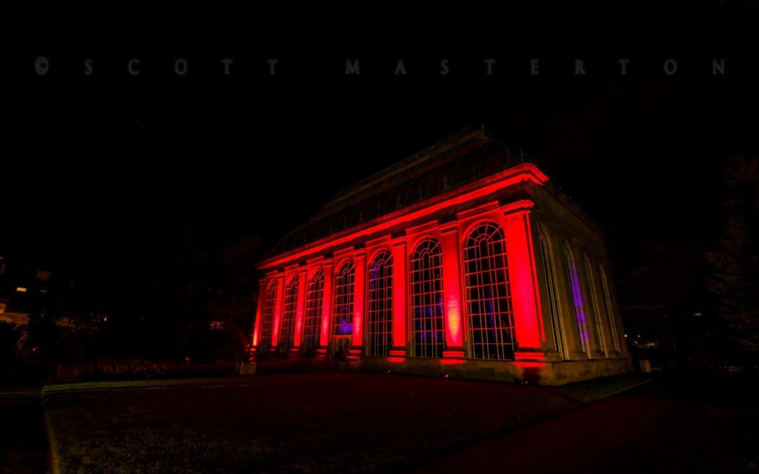 Adobe Spark Photo Story | Botanic Lights, Edinburgh 2016